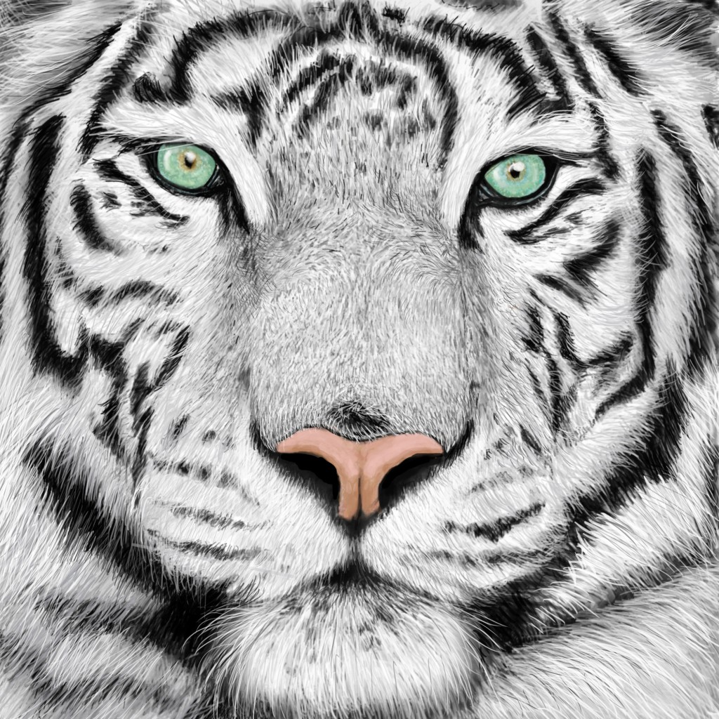 White Tiger / Lisa Matheson / Black Squirrel Art Company